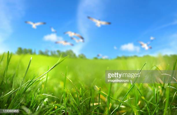 green field - innocence stock pictures, royalty-free photos & images