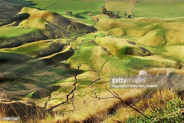 green field - napier stock-fotos und bilder