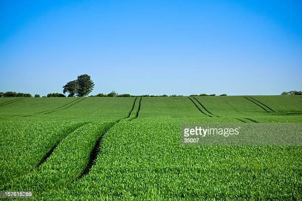 green field - schleswig holstein stock pictures, royalty-free photos & images