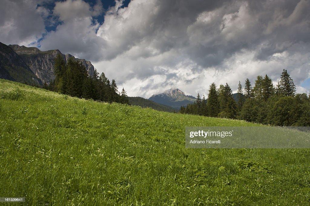 Green field : Foto stock