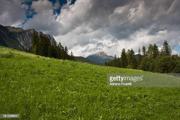 green field - adriano ficarelli stock pictures, royalty-free photos & images