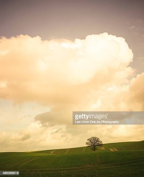 green field - lise ulrich stock pictures, royalty-free photos & images