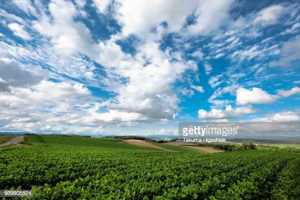 green field - hokkaido stock pictures, royalty-free photos & images