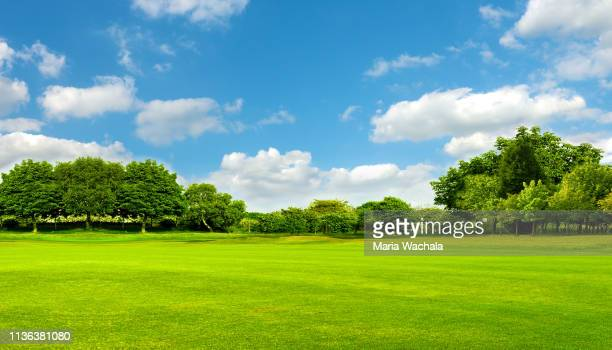 green field, tree and blue sky - sky stock pictures, royalty-free photos & images