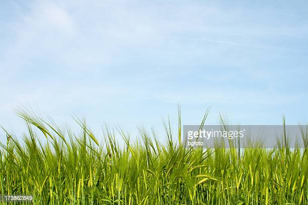 Green field with blue sky graphic