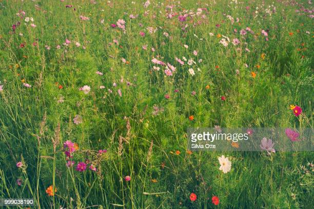 Green Field with many colourful flowers