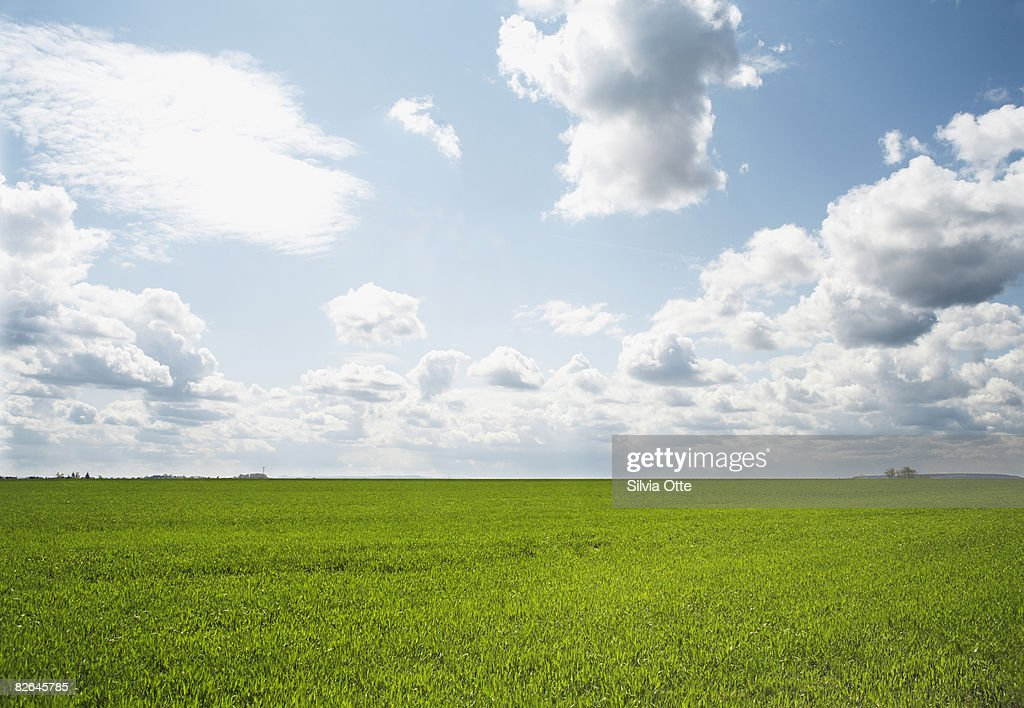 green field with sky : Stock Photo