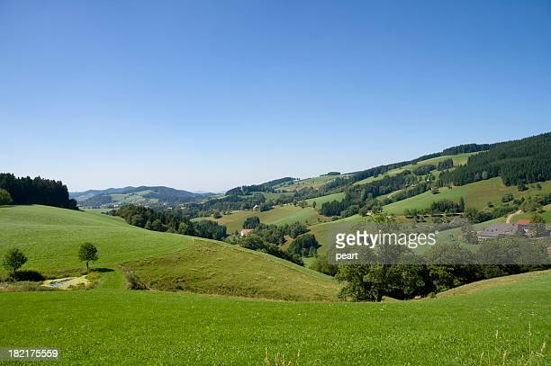 Green field with trees landscape