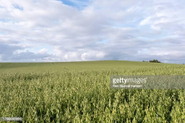 green field with white and yellow dandelions outdoors in nature in summer - finn bjurvoll stockfoto's en -beelden