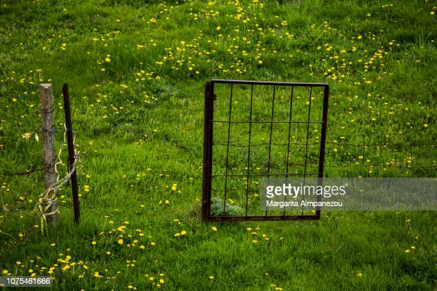 Green field with yellow flowers and an old metal open door