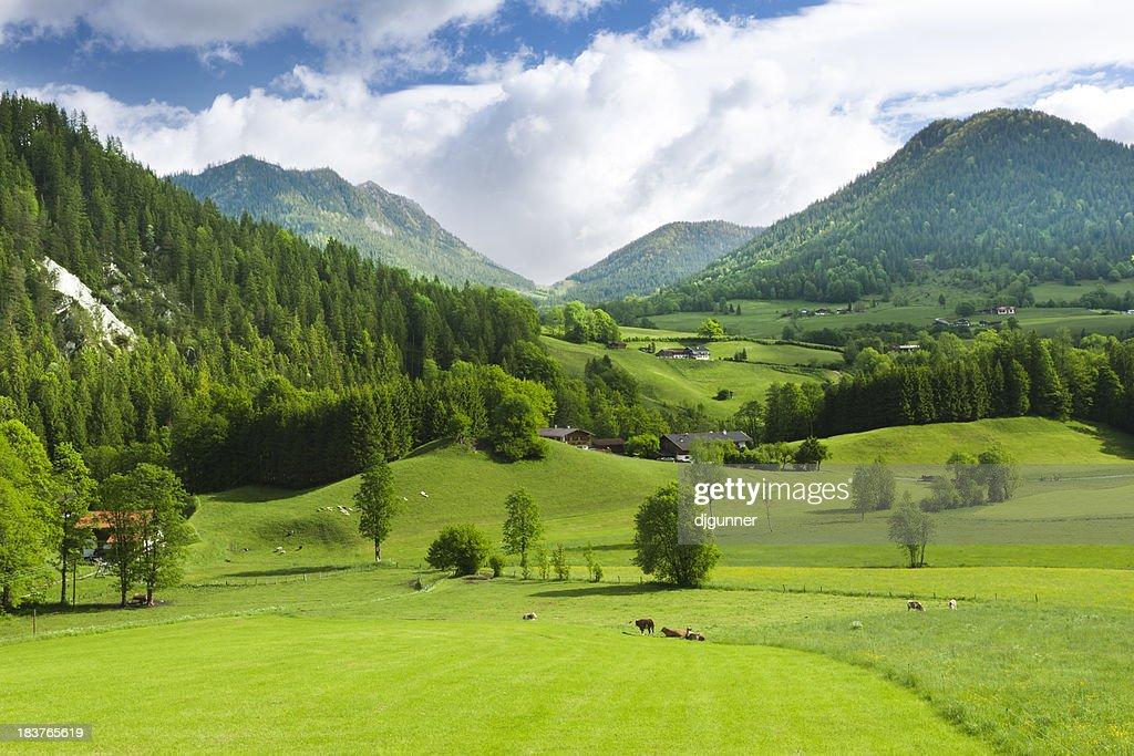 Grüne Felder und mounatins : Stock-Foto