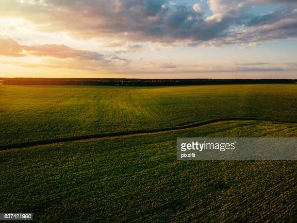 Green fields at sunset