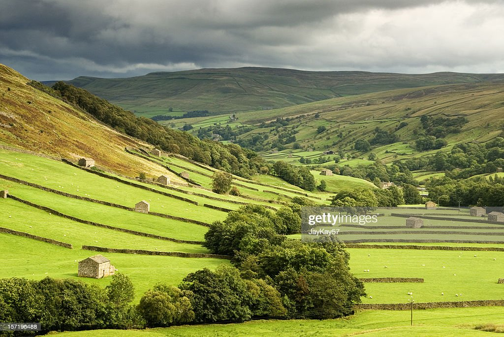 Green fields at Swaledale, Yorkshire : Stock Photo