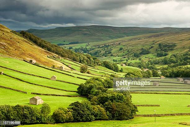 green fields at swaledale, yorkshire - stone wall stock pictures, royalty-free photos & images