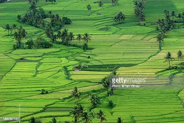 Green Fields II