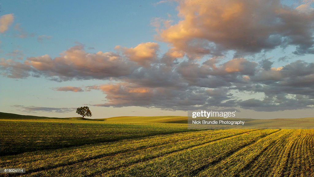 Green Fields : Stock Photo
