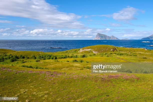 green filed with ocean and rocky island in the background at sommarøy in northern norway - finn bjurvoll stockfoto's en -beelden