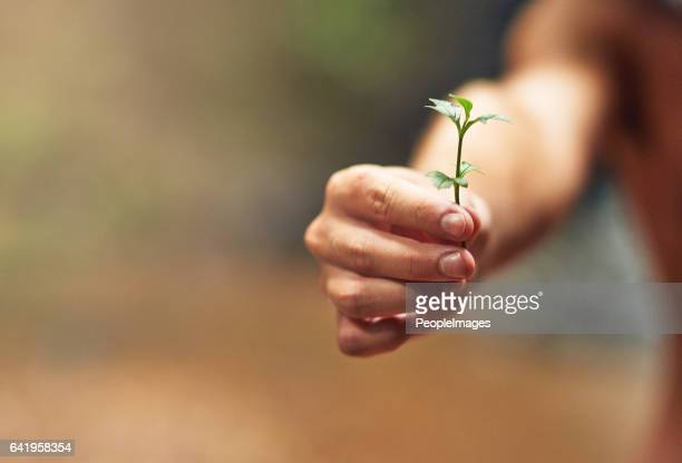 green fingers - sustainability stock photos and pictures