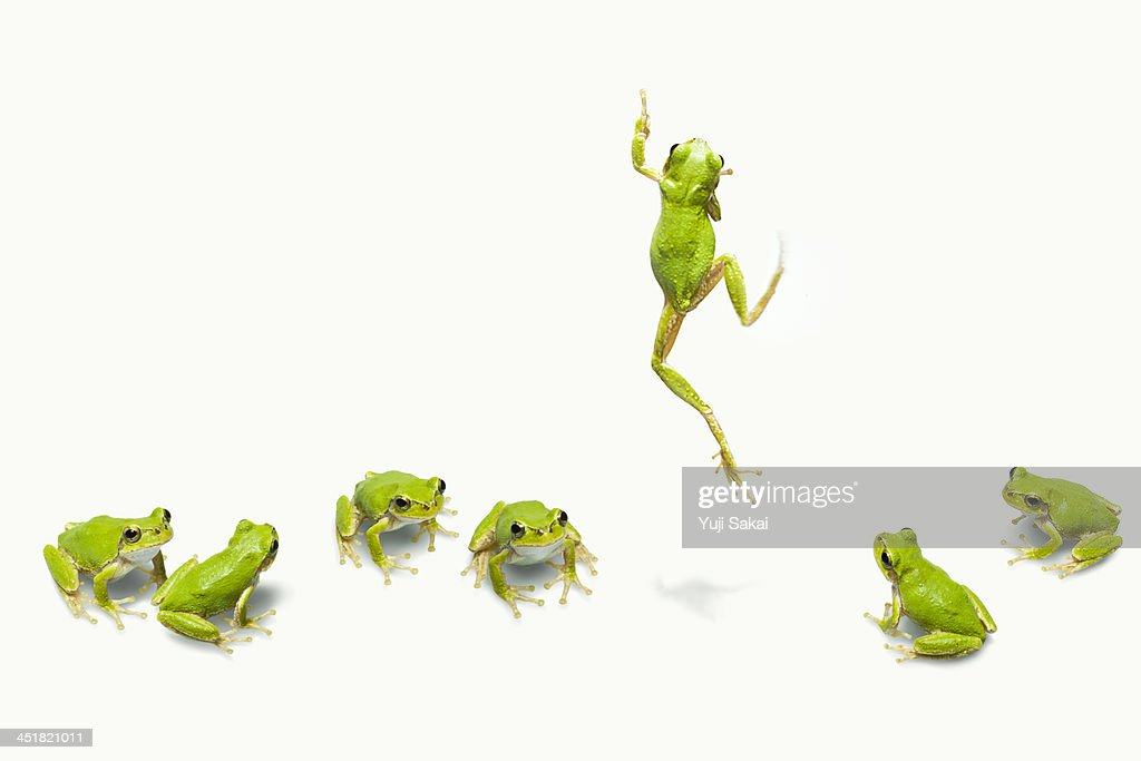Green flog jumping : Stock Photo