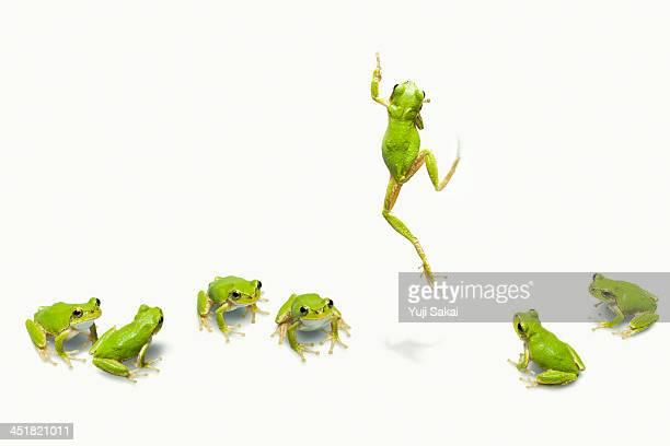 Green flog jumping