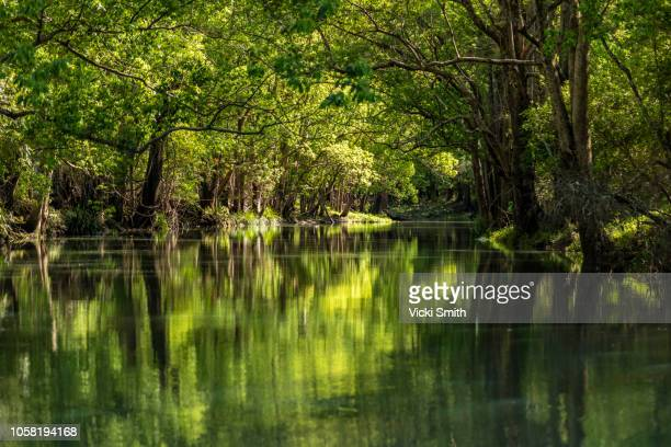 green flowing stream - flowing water stock pictures, royalty-free photos & images