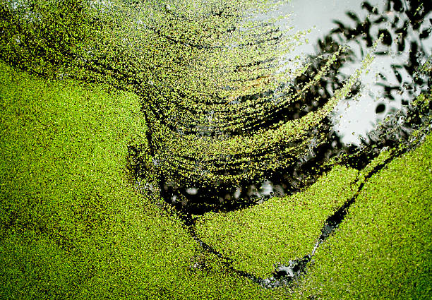Green foilage floating on water surface