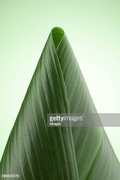 Green Folded Cone-shape Leaf