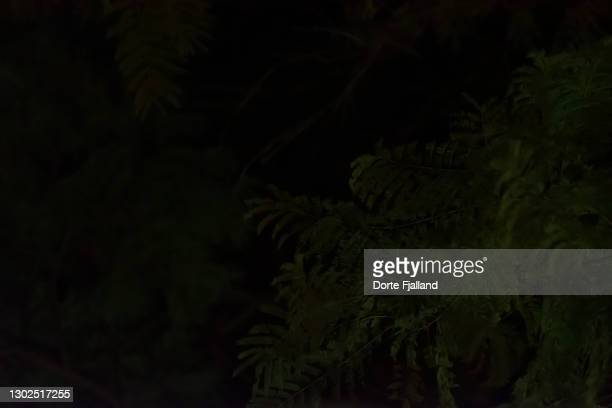 green foliage against a black night sky - dorte fjalland fotografías e imágenes de stock