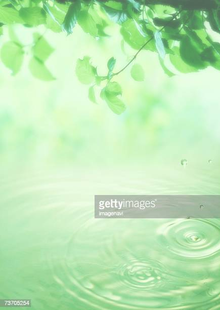 Green foliage and water drops