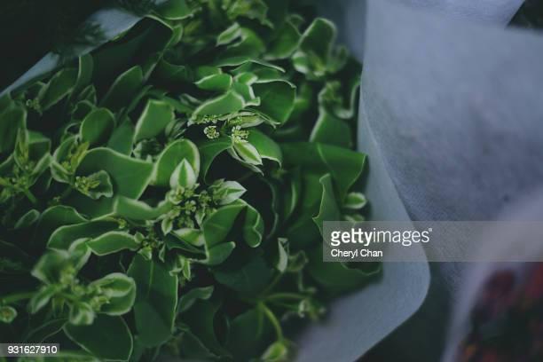 green - foliage bouquet - カリフォルニアバイケイソウ ストックフォトと画像