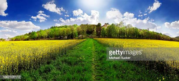 Green footpath in the middle of bright yellow rape fields leading to an avenue of trees of the Willibaldsburg, Willibald Fortress in Eichstaett, Bavaria, Germany