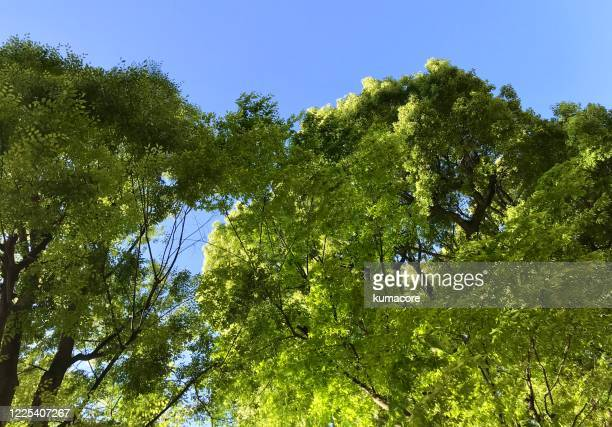 green fores - forens stock pictures, royalty-free photos & images
