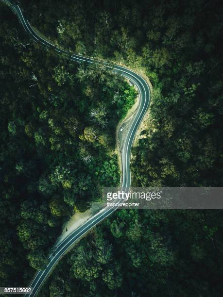 green forest aerial view in australia