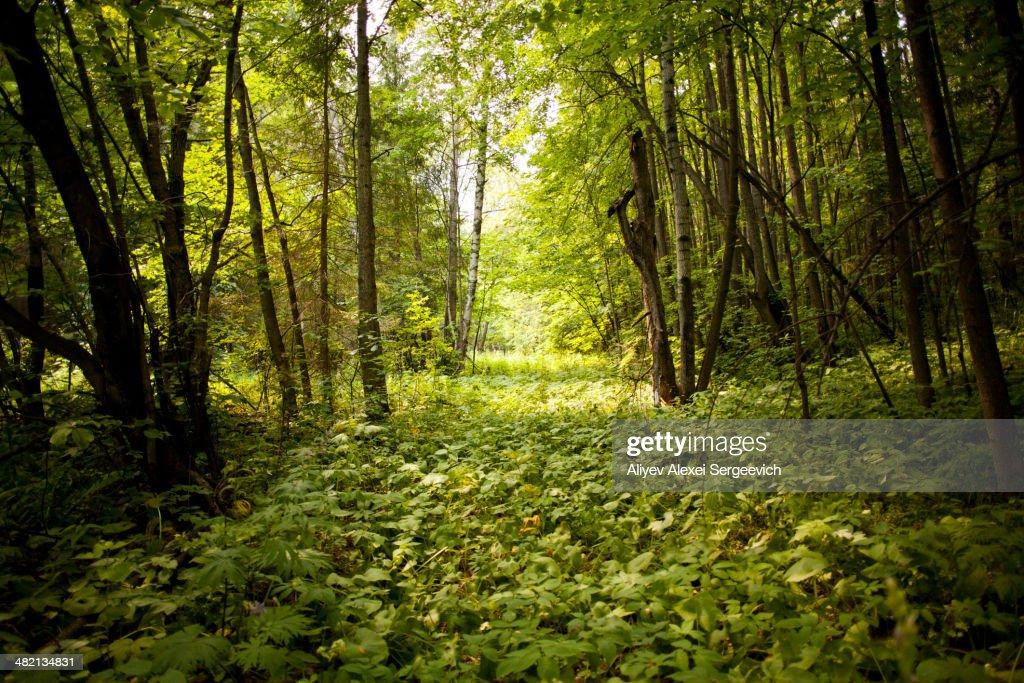 Green forest floor in rural landscape : Stock Photo
