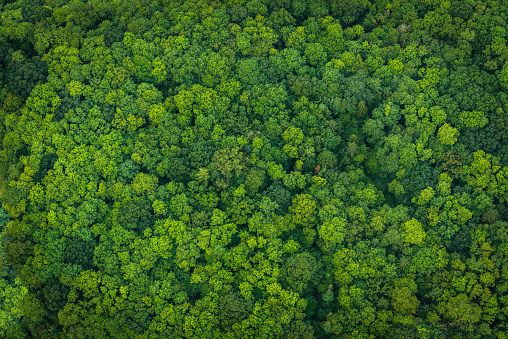Green forest foliage aerial view woodland tree canopy nature background 598520904