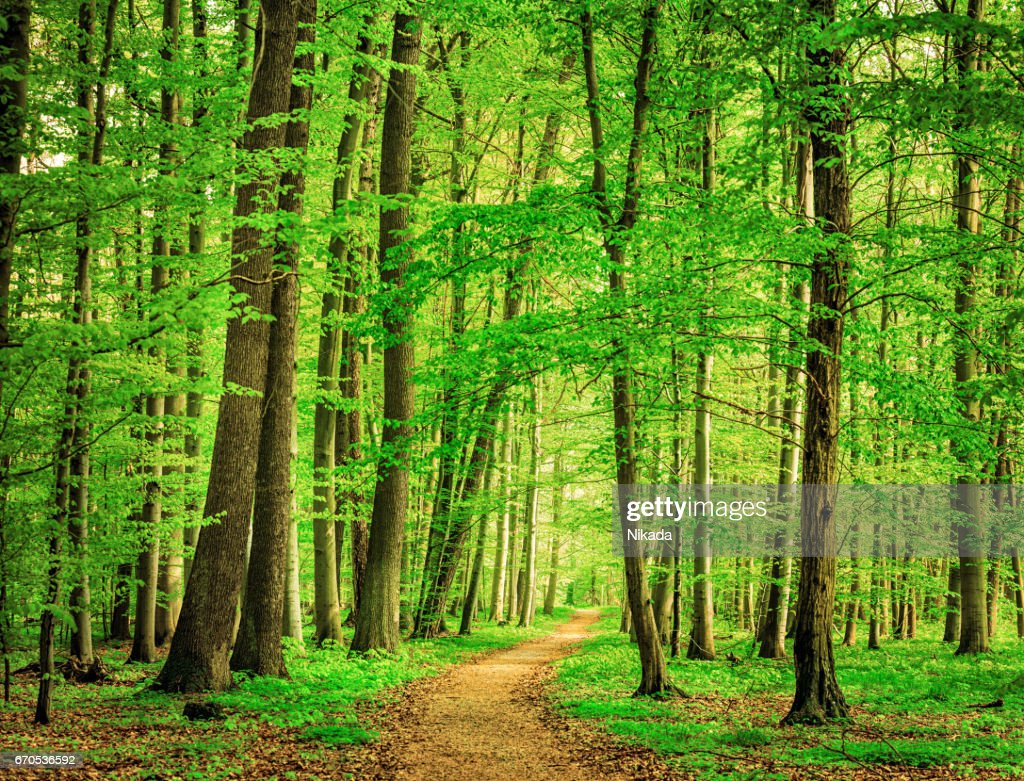 Green Forest In Spring Stock Photo