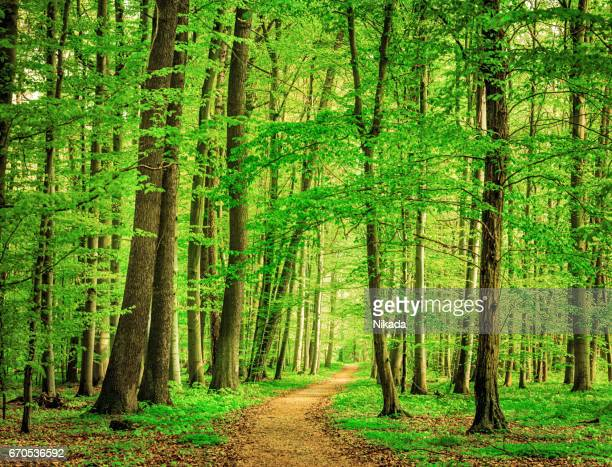 green forest in spring - lush stock pictures, royalty-free photos & images