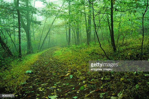 green forest landscape path and trees into the mist - skyline drive virginia stock photos and pictures