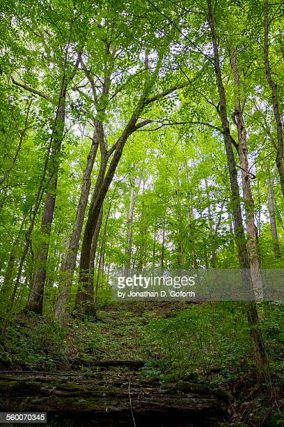 green forest - eubank stock photos and pictures
