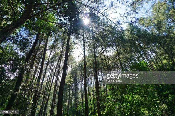 green forest - bogor stock pictures, royalty-free photos & images