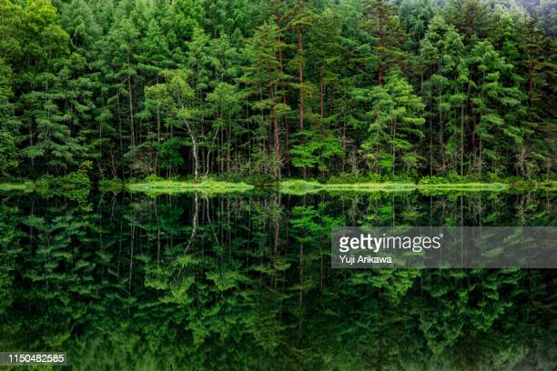 green forest reflected in the pond - beauty in nature stock pictures, royalty-free photos & images