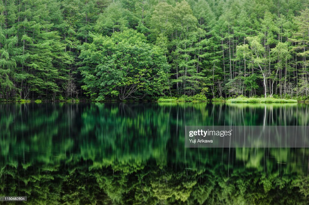 Green forest reflected in the pond : Foto de stock