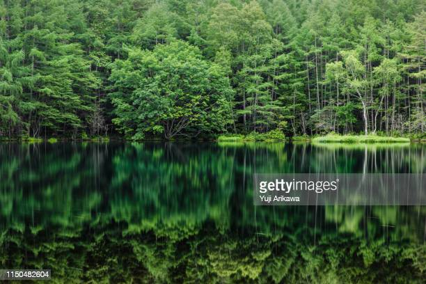 green forest reflected in the pond - lush foliage stock pictures, royalty-free photos & images