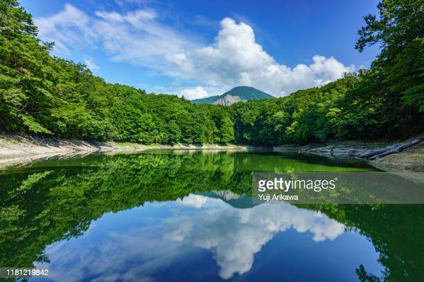 green forest reflected in the pond - 東北地方 ストックフォトと画像