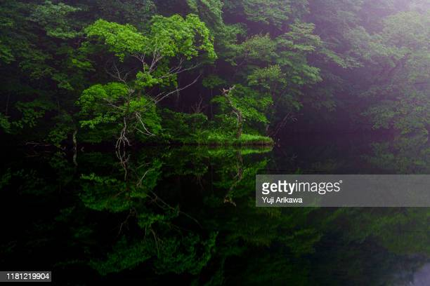 green forest reflected in the pond - light natural phenomenon stock pictures, royalty-free photos & images