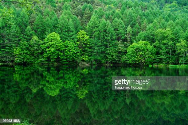 Green forest reflected in water, Mishaka, Japan
