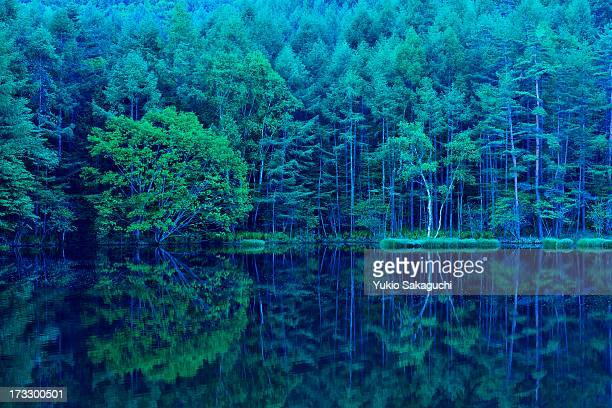 Green forest reflection