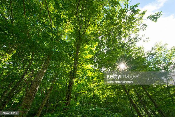 green forrest and sunbeam - saha entertainment stock pictures, royalty-free photos & images
