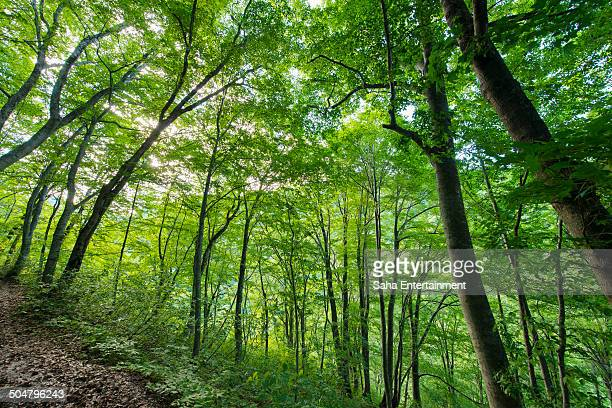 green forrest - saha entertainment stock pictures, royalty-free photos & images