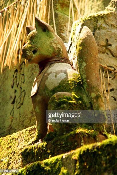zorro verde - hunter green fotografías e imágenes de stock